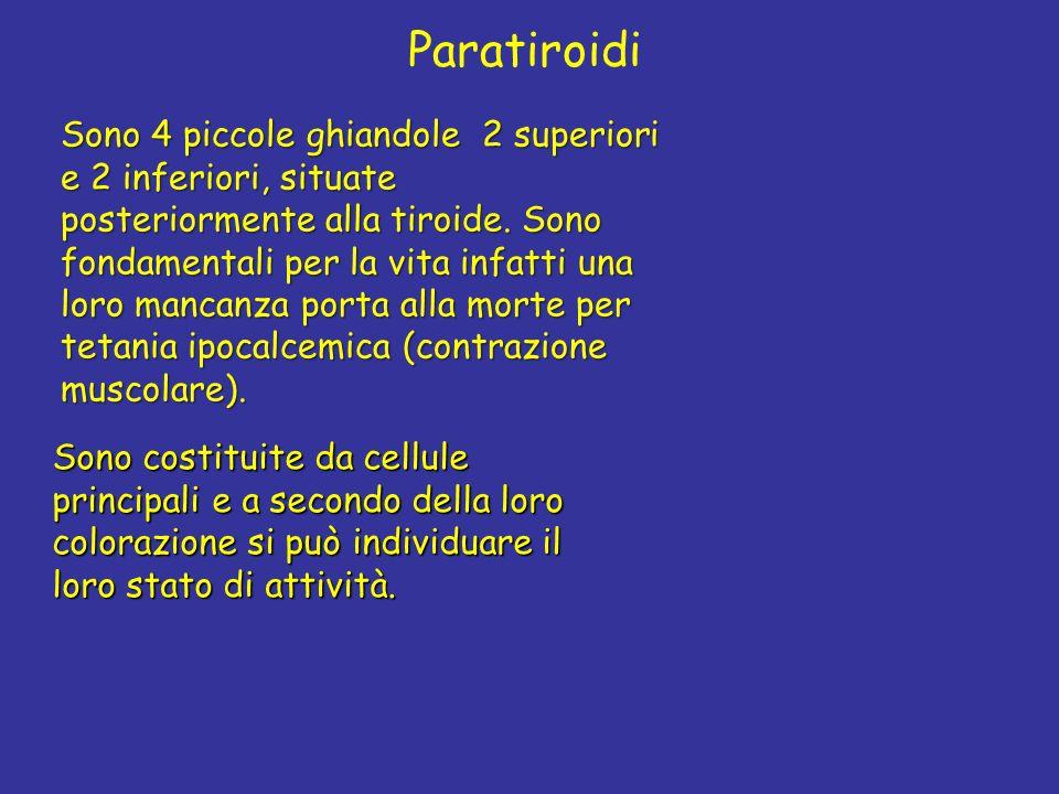 Paratiroidi Sono 4 piccole ghiandole 2 superiori e 2 inferiori, situate posteriormente alla tiroide. Sono fondamentali per la vita infatti una loro ma