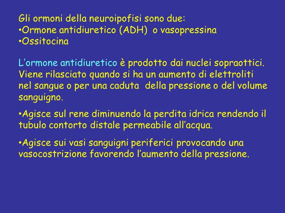 Gli ormoni della neuroipofisi sono due: Ormone antidiuretico (ADH) o vasopressina Ossitocina Lormone antidiuretico è prodotto dai nuclei sopraottici.