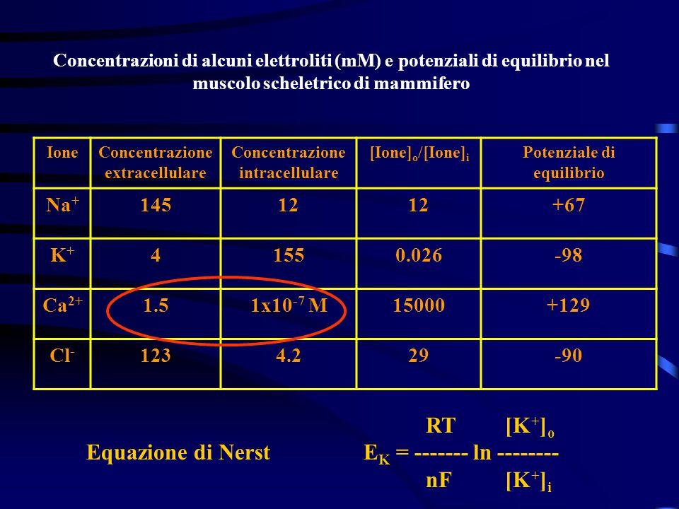 Concentrazioni di alcuni elettroliti (mM) e potenziali di equilibrio nel muscolo scheletrico di mammifero IoneConcentrazione extracellulare Concentraz