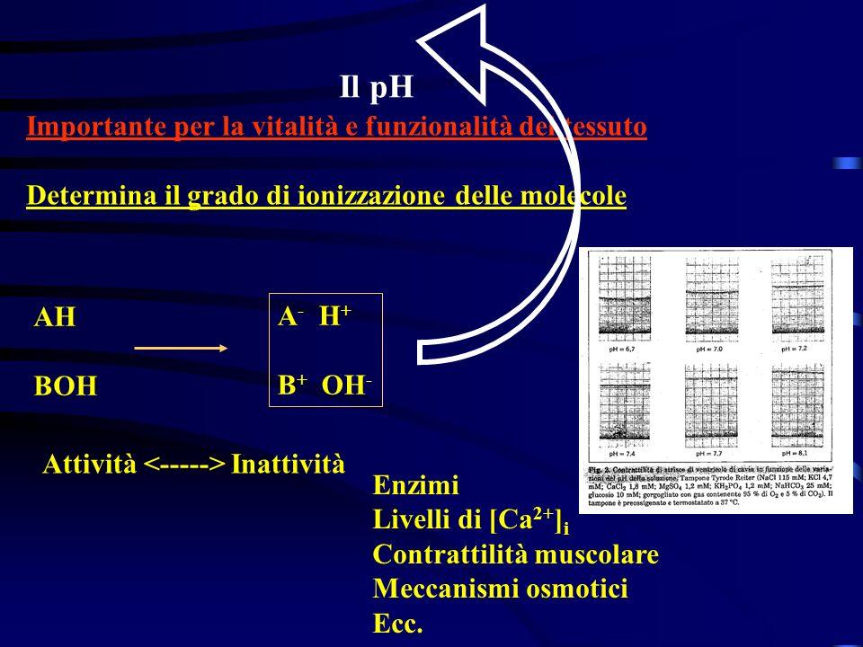 Il pH Importante per la vitalità e funzionalità del tessuto Determina il grado di ionizzazione delle molecole AH BOH A - H + B + OH - Attività Inattiv