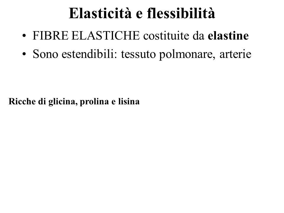 Elasticità e flessibilità FIBRE ELASTICHE costituite da elastine Sono estendibili: tessuto polmonare, arterie Ricche di glicina, prolina e lisina