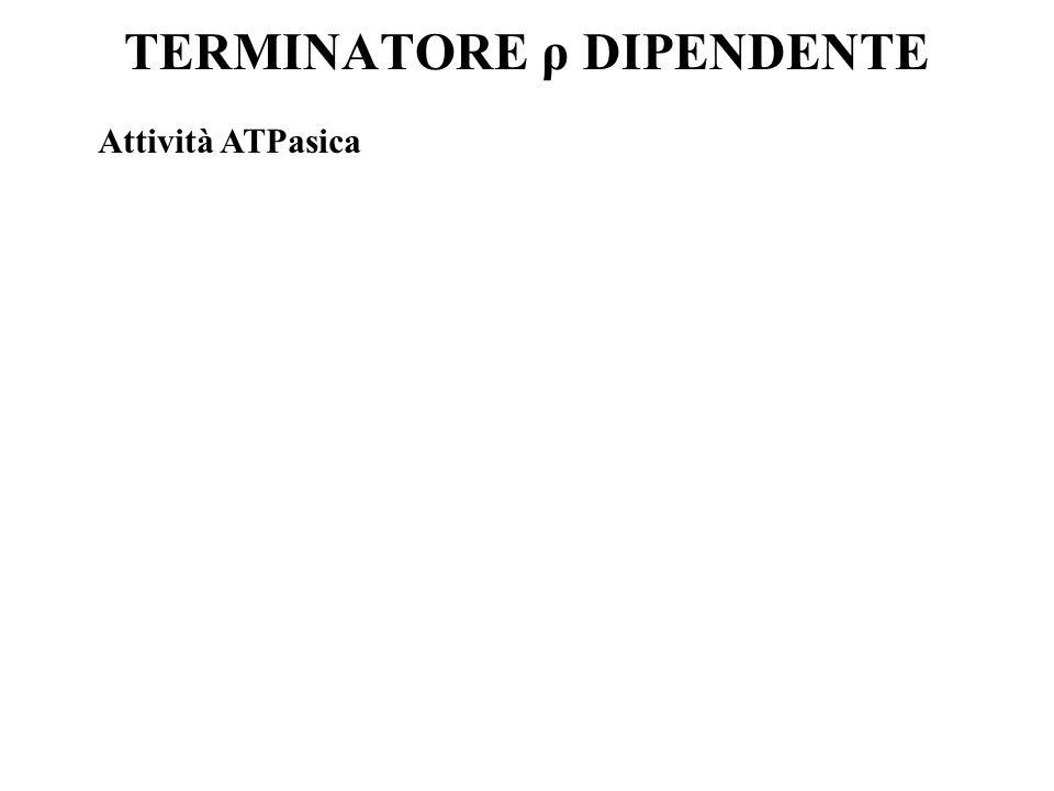 TERMINATORE ρ DIPENDENTE Attività ATPasica