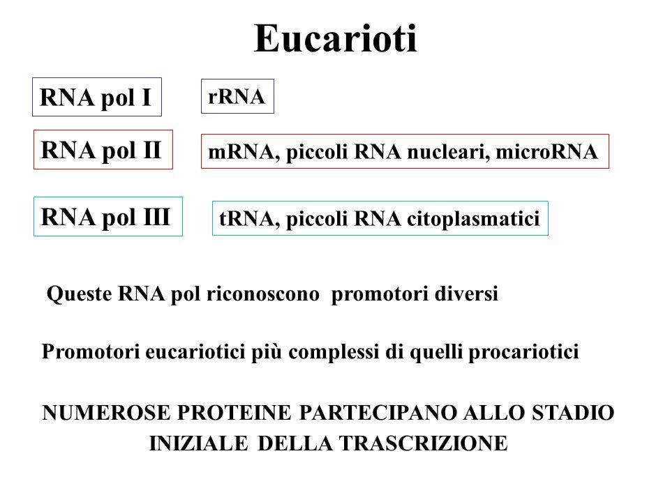 Eucarioti RNA pol I RNA pol II RNA pol III mRNA, piccoli RNA nucleari, microRNA rRNA tRNA, piccoli RNA citoplasmatici NUMEROSE PROTEINE PARTECIPANO ALLO STADIO INIZIALE DELLA TRASCRIZIONE Queste RNA pol riconoscono promotori diversi Promotori eucariotici più complessi di quelli procariotici