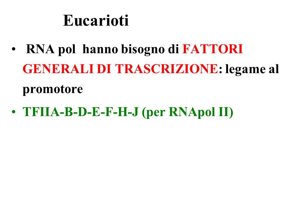 Eucarioti RNA pol hanno bisogno di FATTORI GENERALI DI TRASCRIZIONE: legame al promotore TFIIA-B-D-E-F-H-J (per RNApol II)