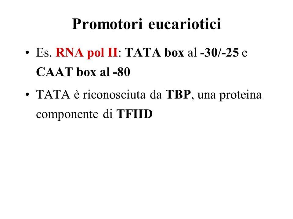 Promotori eucariotici Es.