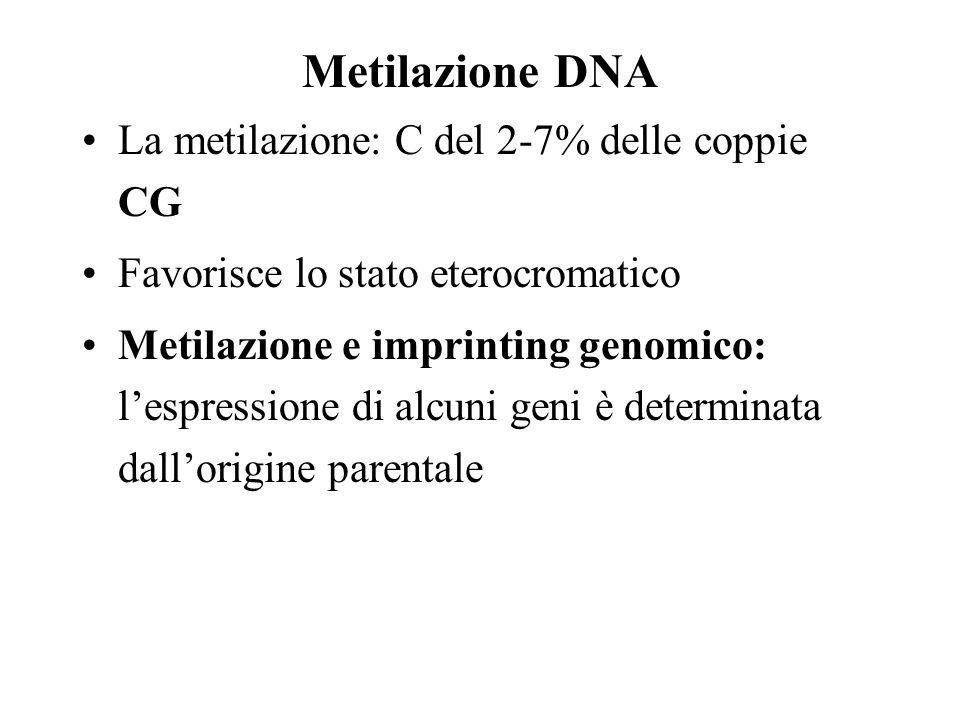 Metilazione DNA La metilazione: C del 2-7% delle coppie CG Favorisce lo stato eterocromatico Metilazione e imprinting genomico: lespressione di alcuni geni è determinata dallorigine parentale