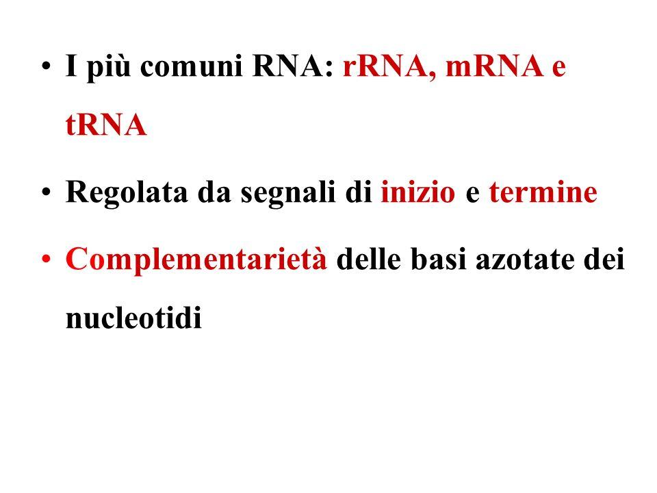 I più comuni RNA: rRNA, mRNA e tRNA Regolata da segnali di inizio e termine Complementarietà delle basi azotate dei nucleotidi