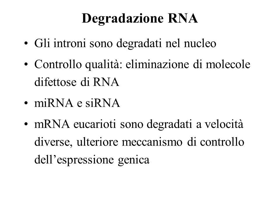 Degradazione RNA Gli introni sono degradati nel nucleo Controllo qualità: eliminazione di molecole difettose di RNA miRNA e siRNA mRNA eucarioti sono degradati a velocità diverse, ulteriore meccanismo di controllo dellespressione genica
