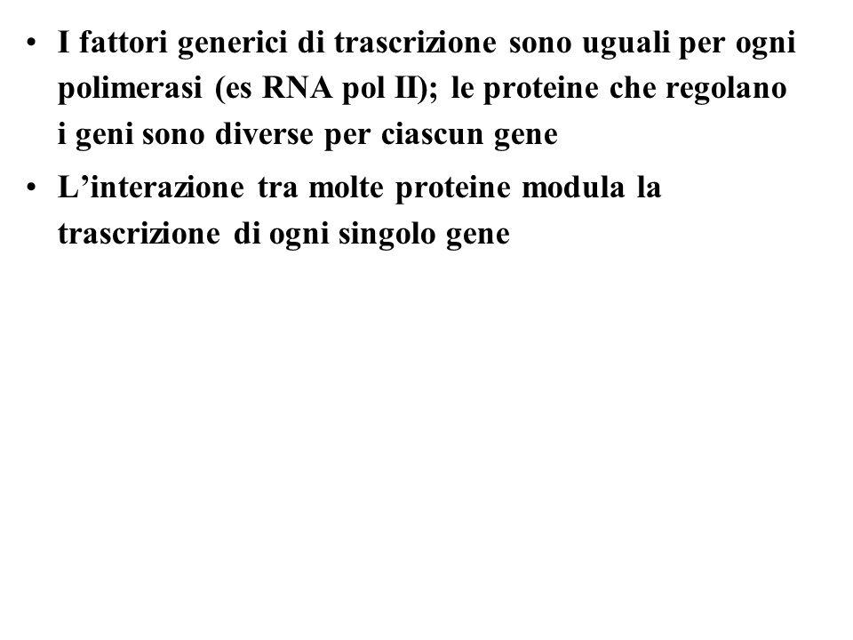 I fattori generici di trascrizione sono uguali per ogni polimerasi (es RNA pol II); le proteine che regolano i geni sono diverse per ciascun gene Linterazione tra molte proteine modula la trascrizione di ogni singolo gene