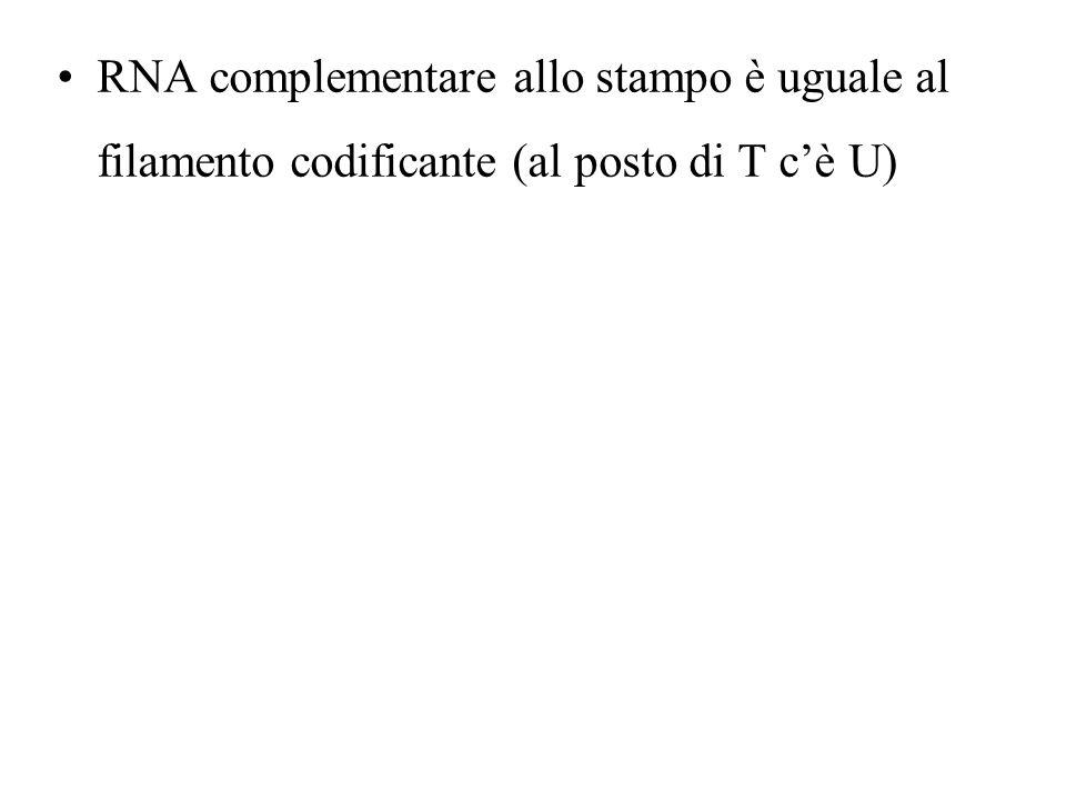RNA complementare allo stampo è uguale al filamento codificante (al posto di T cè U)