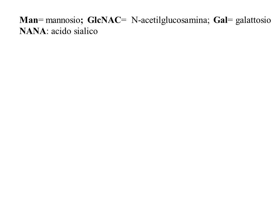 Man= mannosio; GlcNAC= N-acetilglucosamina; Gal= galattosio NANA: acido sialico