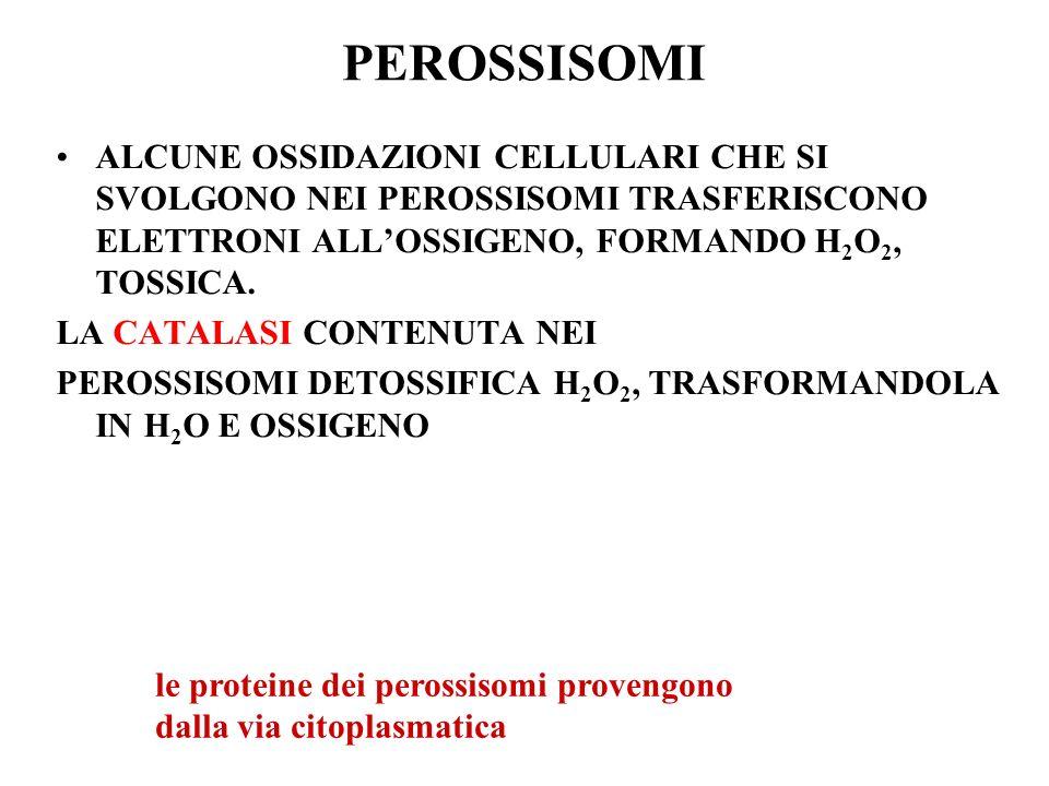 ALCUNE OSSIDAZIONI CELLULARI CHE SI SVOLGONO NEI PEROSSISOMI TRASFERISCONO ELETTRONI ALLOSSIGENO, FORMANDO H 2 O 2, TOSSICA. LA CATALASI CONTENUTA NEI