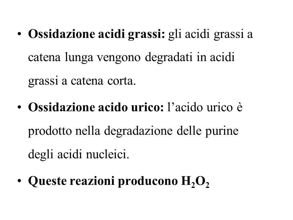 Ossidazione acidi grassi: gli acidi grassi a catena lunga vengono degradati in acidi grassi a catena corta. Ossidazione acido urico: lacido urico è pr