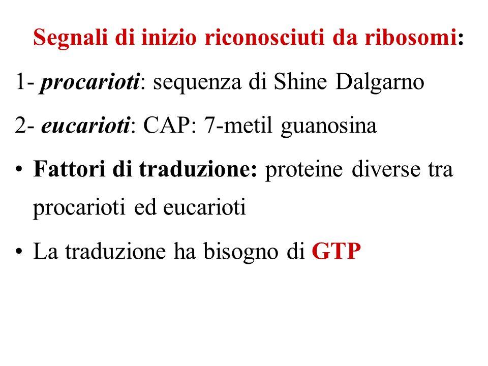 Segnali di inizio riconosciuti da ribosomi: 1- procarioti: sequenza di Shine Dalgarno 2- eucarioti: CAP: 7-metil guanosina Fattori di traduzione: proteine diverse tra procarioti ed eucarioti La traduzione ha bisogno di GTP