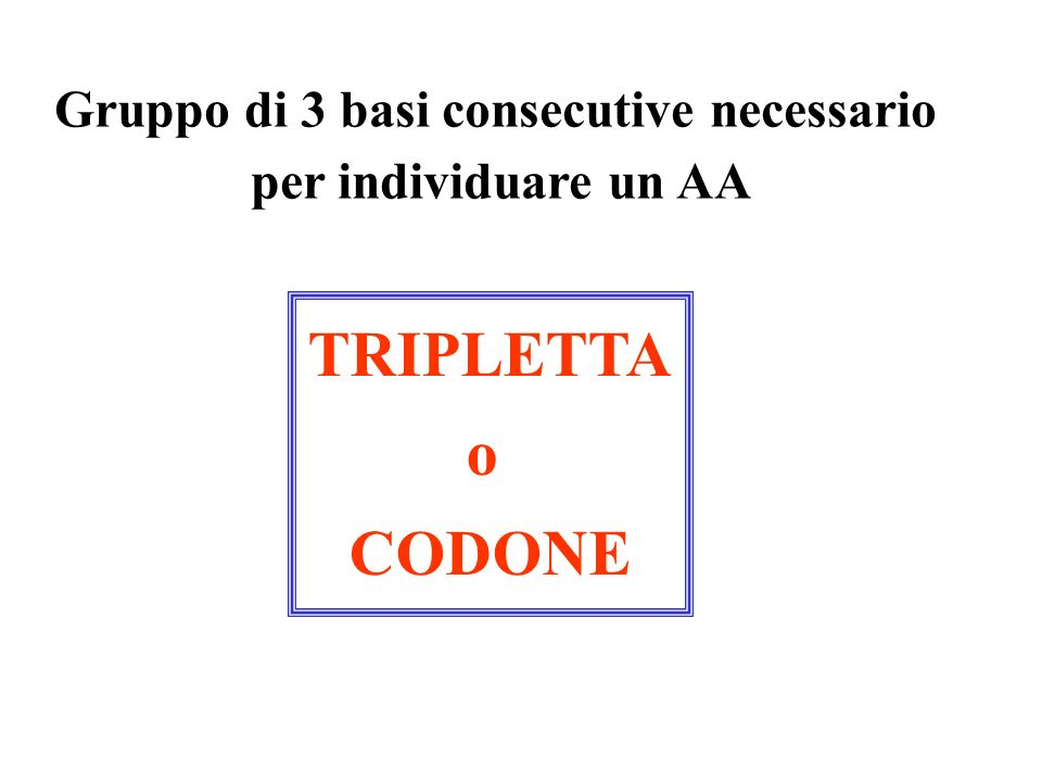 Gruppo di 3 basi consecutive necessario per individuare un AA TRIPLETTA o CODONE