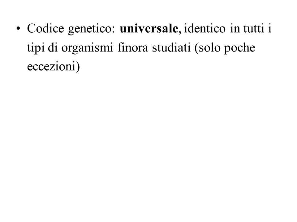 Il messaggio genetico viene letto per codoni consecutivi Segnale dinizio: AUG (amminoacido metionina)