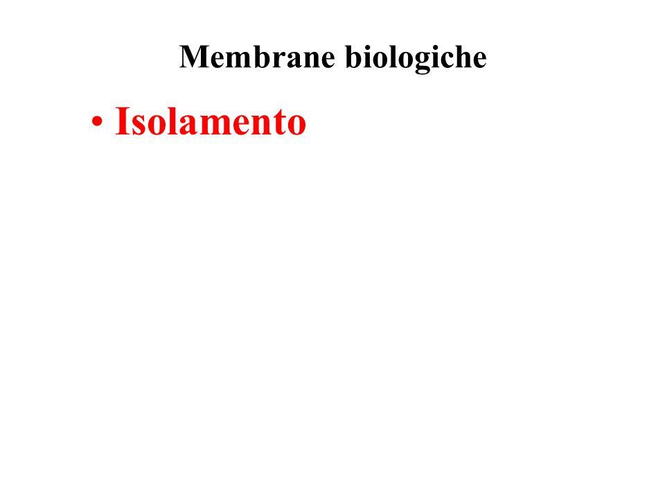Proteine periferiche di membrana Non incorporate, legate debolmente a proteine o fosfolipidi Rimosse senza distruggere la struttura del doppio strato