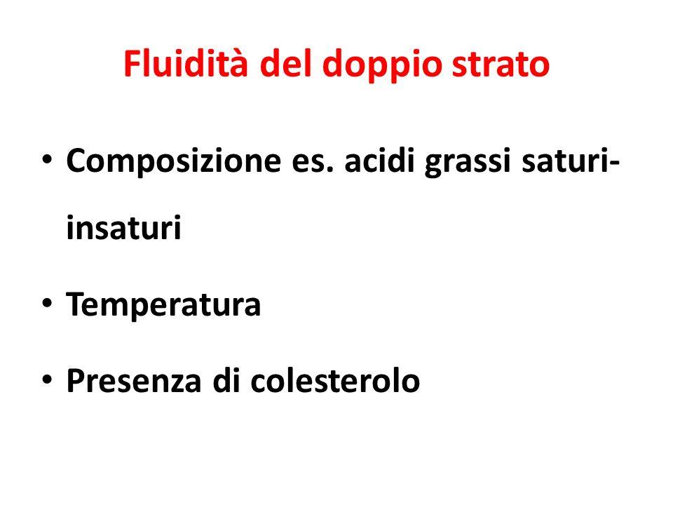 Fluidità del doppio strato Composizione es.