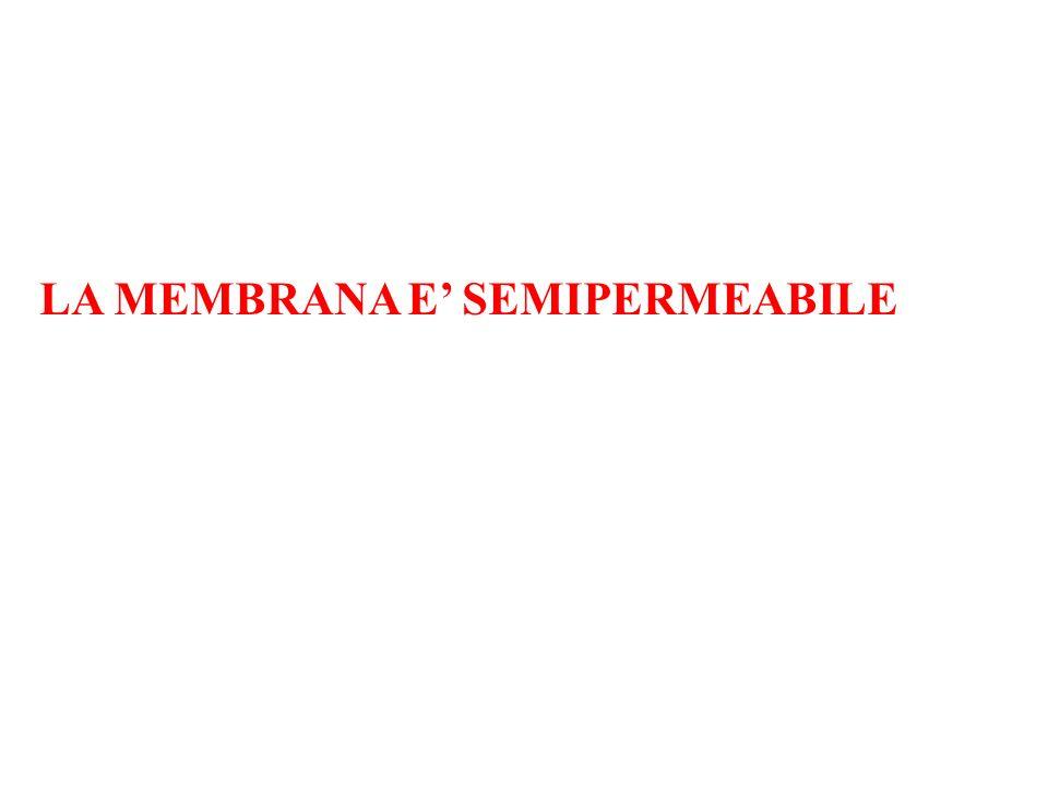 LA MEMBRANA E SEMIPERMEABILE
