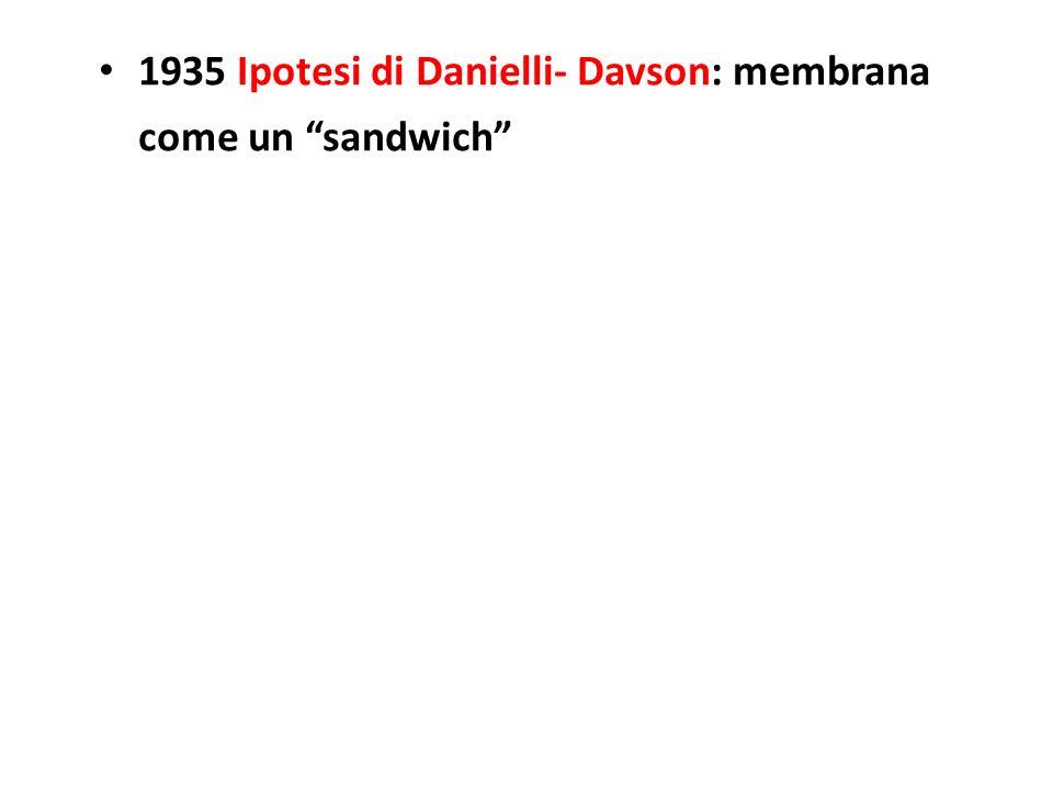 1935 Ipotesi di Danielli- Davson: membrana come un sandwich