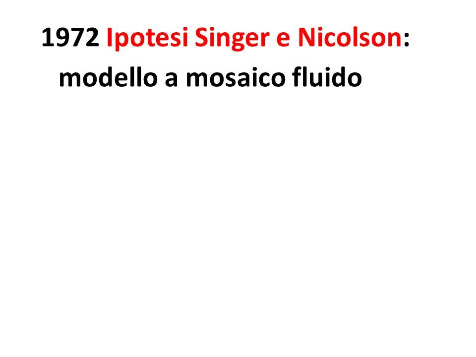 1972 Ipotesi Singer e Nicolson: modello a mosaico fluido