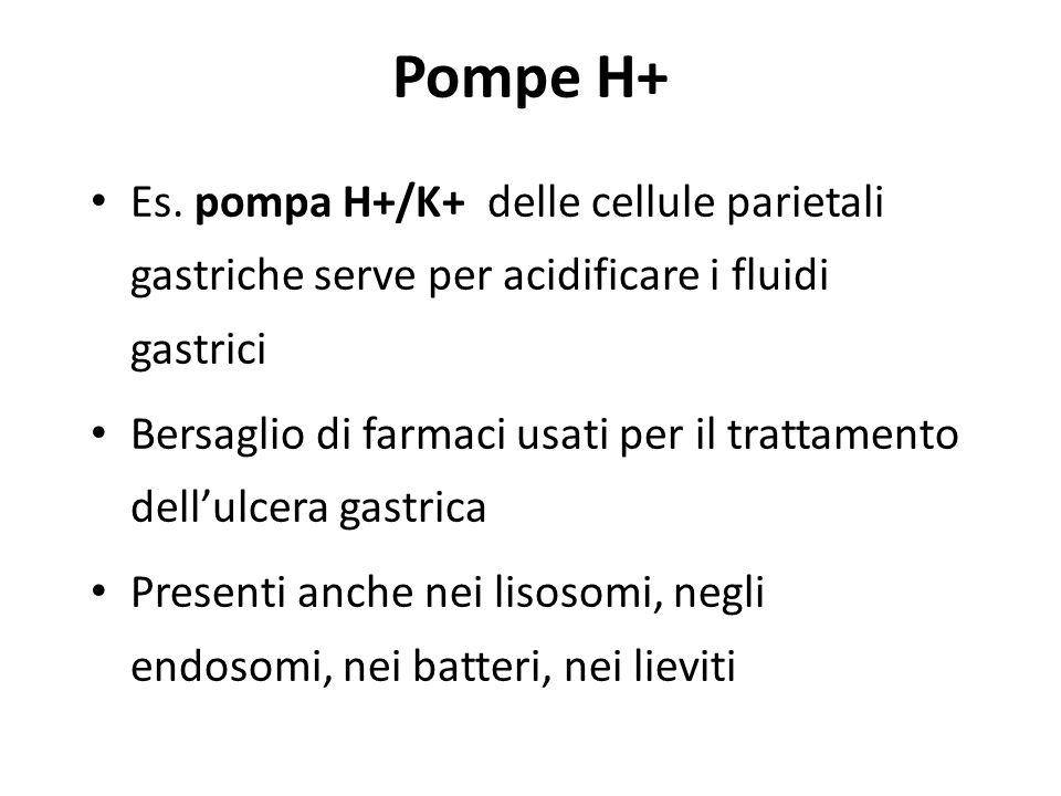 Pompe H+ Es.