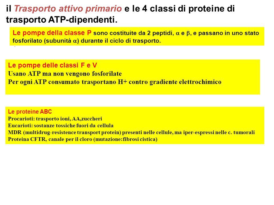 il Trasporto attivo primario e le 4 classi di proteine di trasporto ATP-dipendenti.