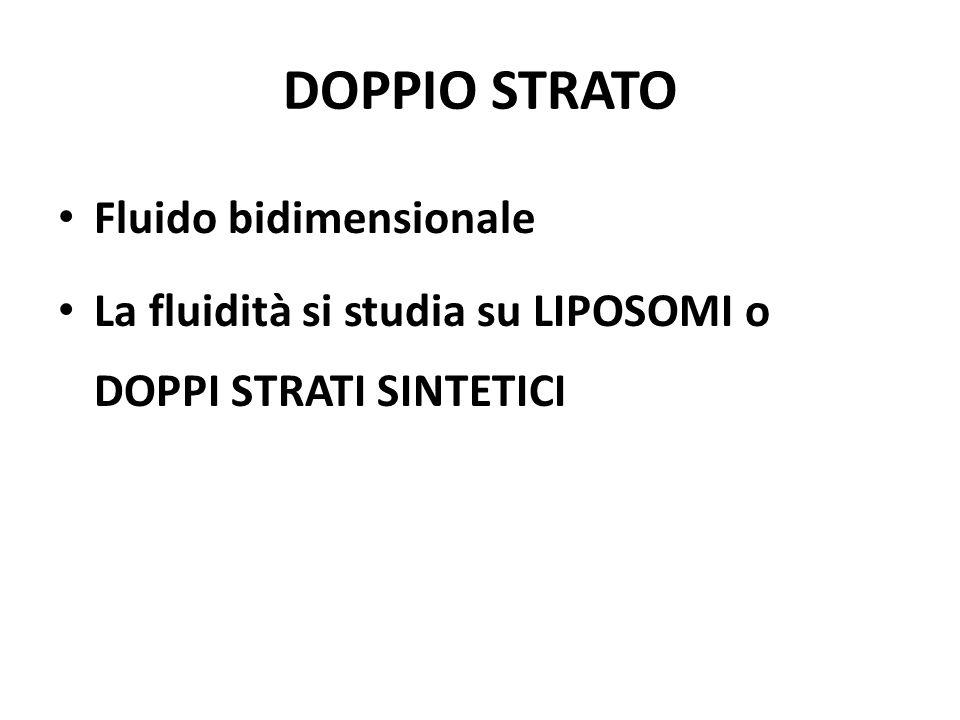 DOPPIO STRATO Fluido bidimensionale La fluidità si studia su LIPOSOMI o DOPPI STRATI SINTETICI