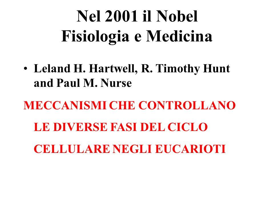 Nel 2001 il Nobel Fisiologia e Medicina Leland H. Hartwell, R. Timothy Hunt and Paul M. Nurse MECCANISMI CHE CONTROLLANO LE DIVERSE FASI DEL CICLO CEL