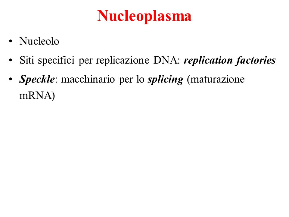 Nucleoplasma Nucleolo Siti specifici per replicazione DNA: replication factories Speckle: macchinario per lo splicing (maturazione mRNA)