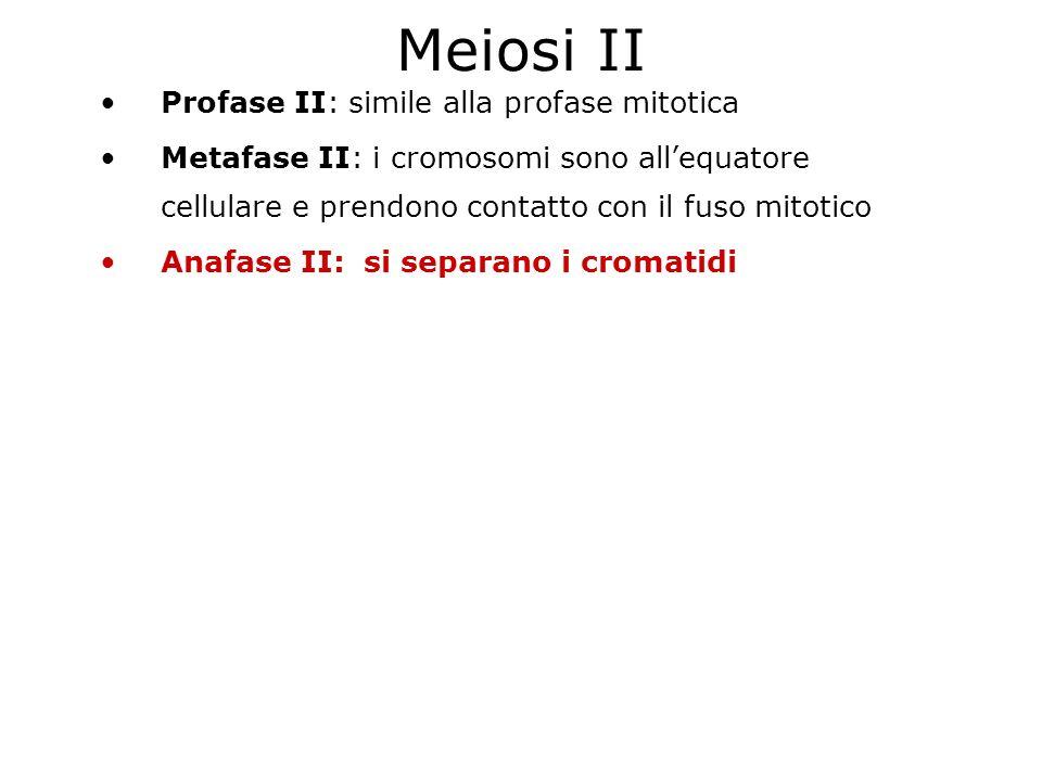 Meiosi II Profase II: simile alla profase mitotica Metafase II: i cromosomi sono allequatore cellulare e prendono contatto con il fuso mitotico Anafas
