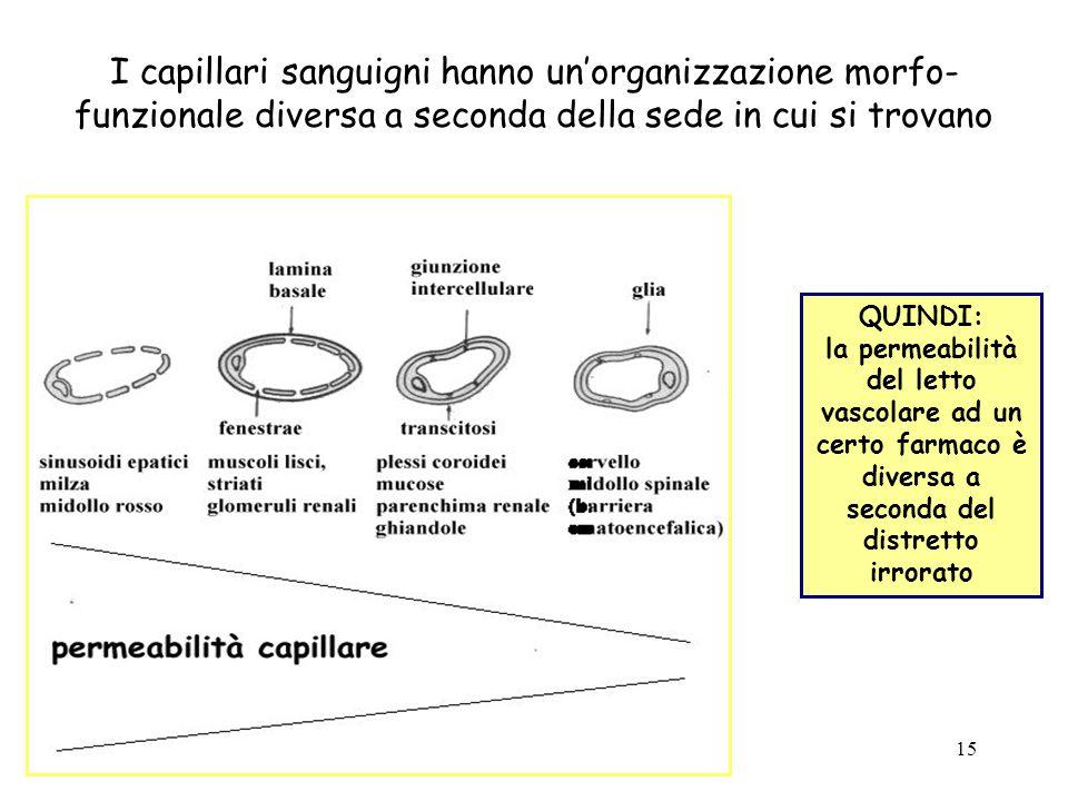 15 I capillari sanguigni hanno unorganizzazione morfo- funzionale diversa a seconda della sede in cui si trovano QUINDI: la permeabilità del letto vas
