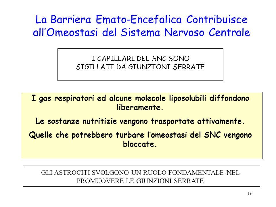 16 La Barriera Emato-Encefalica Contribuisce allOmeostasi del Sistema Nervoso Centrale I CAPILLARI DEL SNC SONO SIGILLATI DA GIUNZIONI SERRATE I gas r