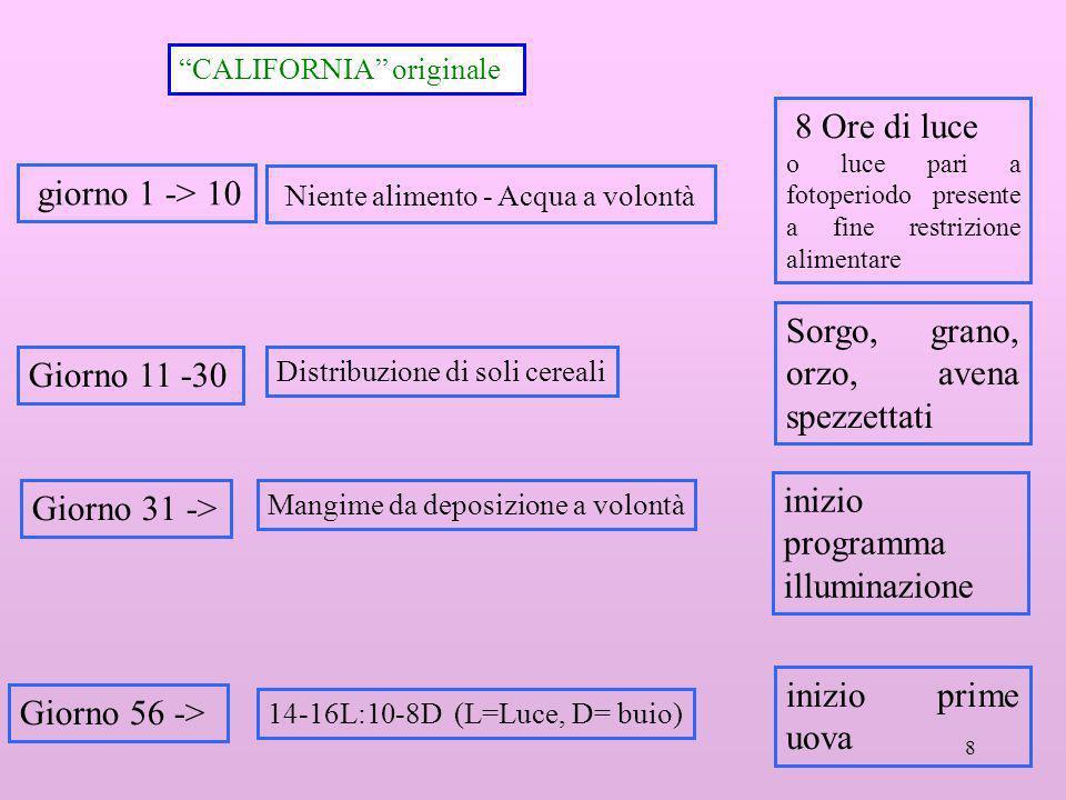 8 CALIFORNIA originale Giorno 56 -> 14-16L:10-8D (L=Luce, D= buio) 8 Ore di luce o luce pari a fotoperiodo presente a fine restrizione alimentare Gior