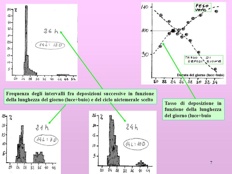 7 Frequenza degli intervalli fra deposizioni successive in funzione della lunghezza del giorno (luce+buio) e del ciclo nictemerale scelto Tasso di deposizione in funzione della lunghezza del giorno (luce+buio