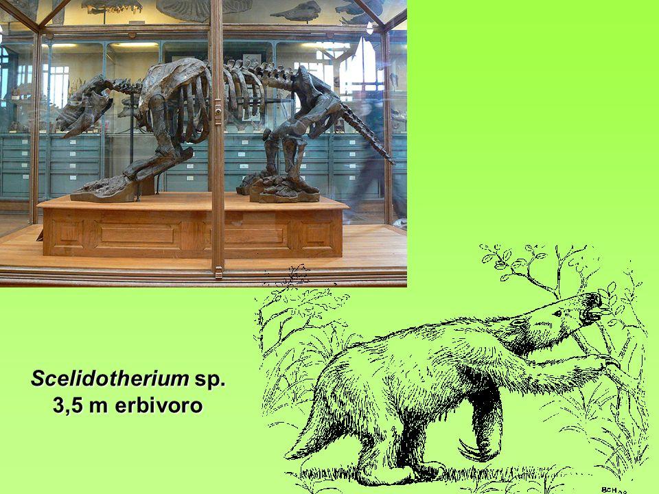 Scelidotherium sp. 3,5 m erbivoro