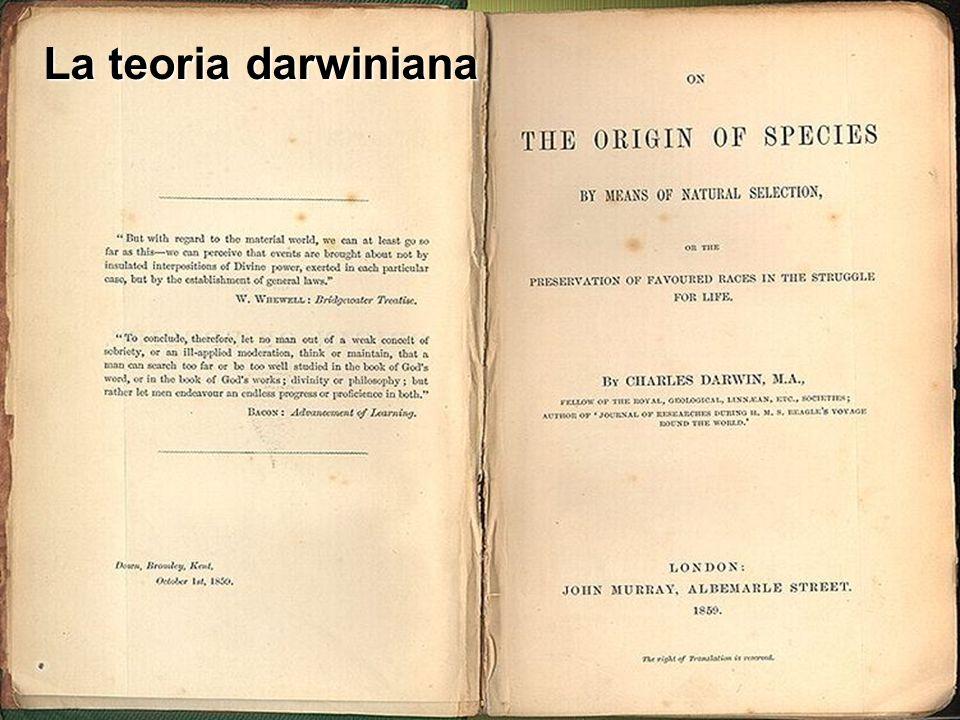 La teoria darwiniana