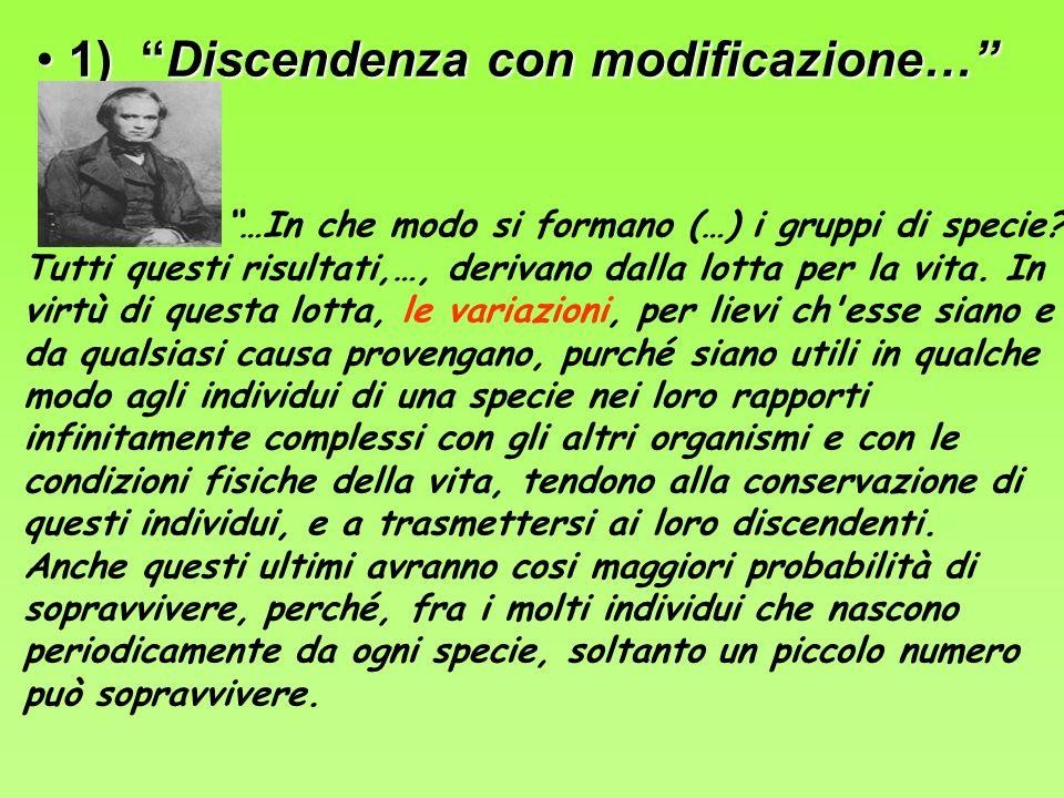 1) Discendenza con modificazione… 1) Discendenza con modificazione… …In che modo si formano (…) i gruppi di specie.