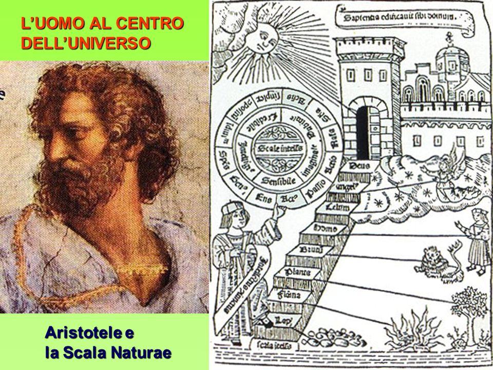 LUOMO AL CENTRO DELLUNIVERSO Aristotele e la Scala Naturae