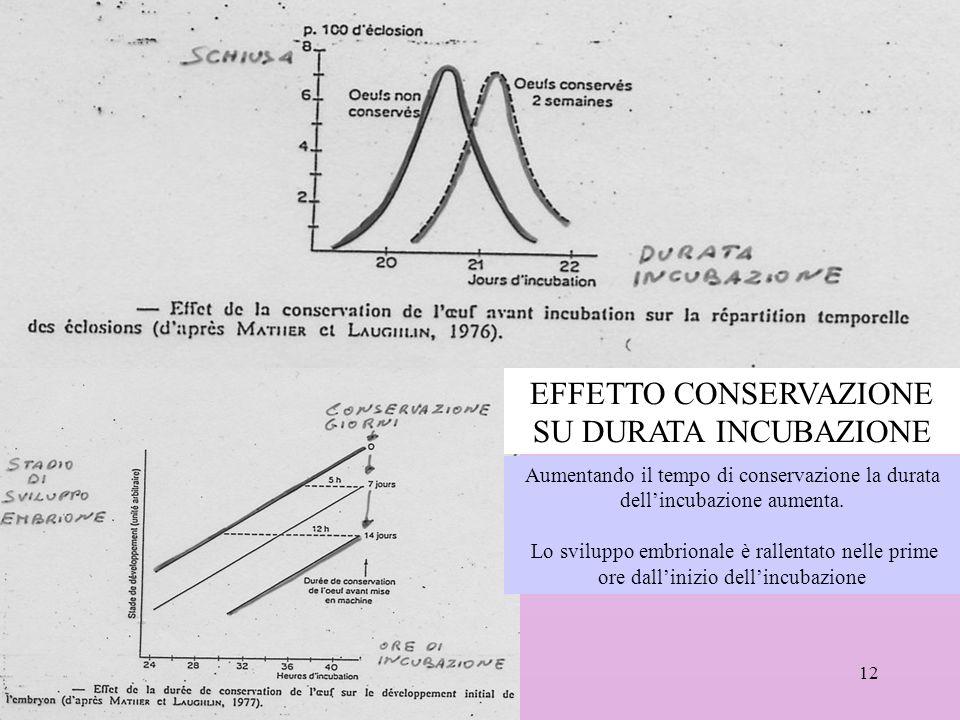 12 EFFETTO CONSERVAZIONE SU DURATA INCUBAZIONE Aumentando il tempo di conservazione la durata dellincubazione aumenta. Lo sviluppo embrionale è rallen