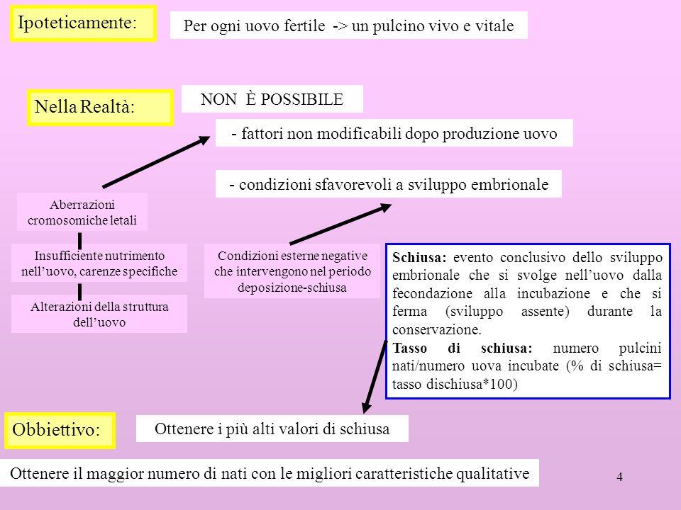4 Ipoteticamente: Per ogni uovo fertile -> un pulcino vivo e vitale Nella Realtà: NON È POSSIBILE - condizioni sfavorevoli a sviluppo embrionale - fat