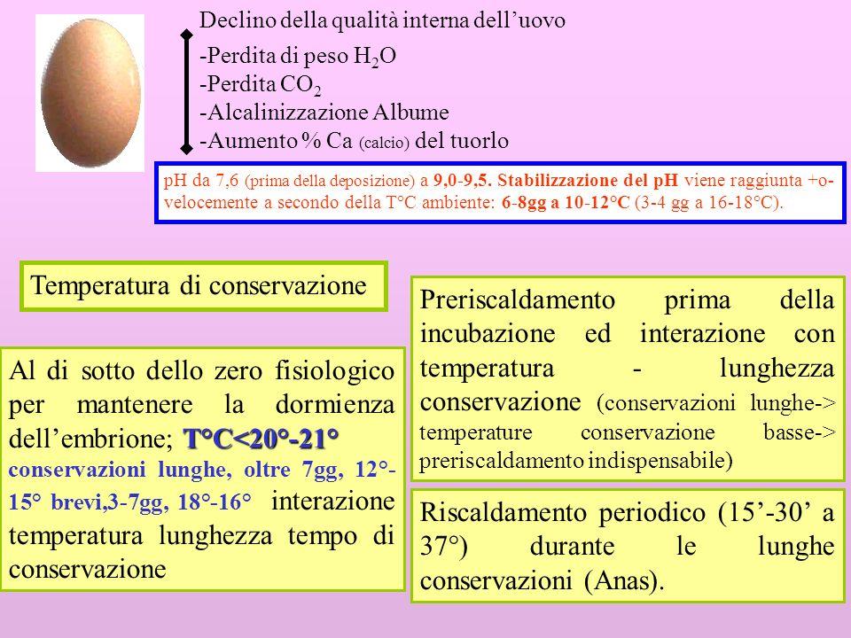8 Umidità relativa U.R.% U.R.=70% Umidità elevata per limitare levaporazione ma evitare la condensa sulle uova U.R.=70% (durante la conservazione le uova devono perdere 0,5- max 1% di peso) Riduzione della movimentazione: meno ricambio dellaria nella camera di conservazione; effetto sempre positivo.