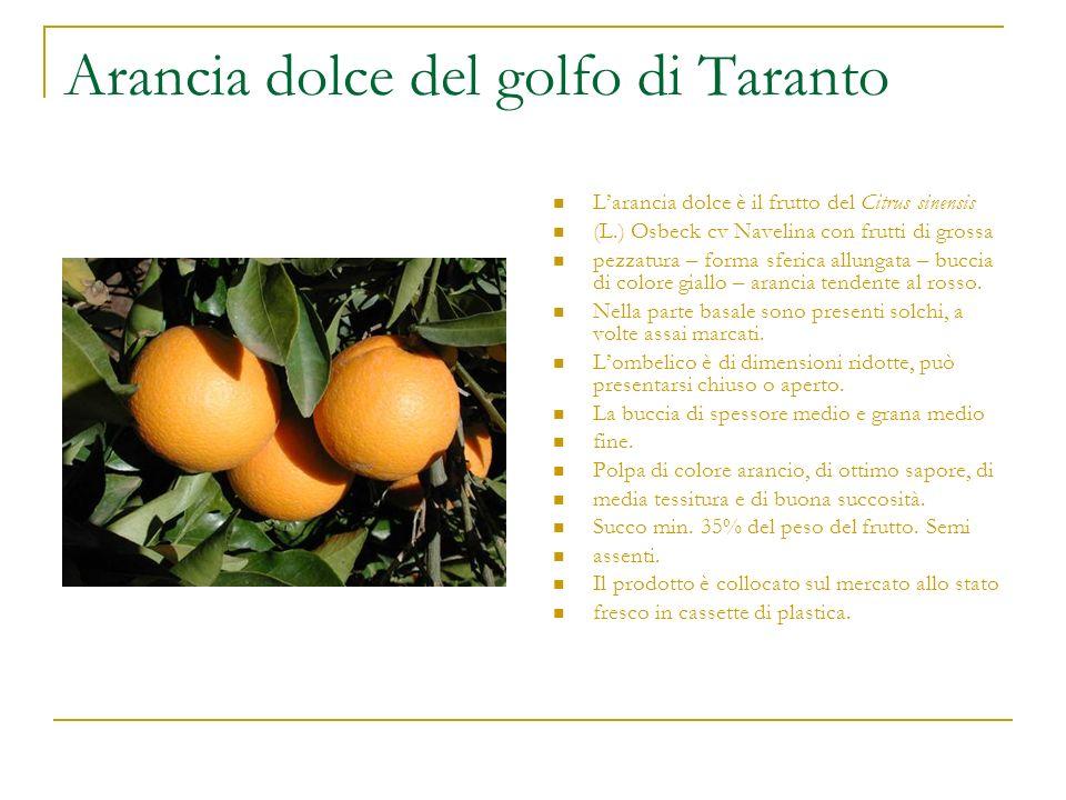Arancia dolce del golfo di Taranto Larancia dolce è il frutto del Citrus sinensis (L.) Osbeck cv Navelina con frutti di grossa pezzatura – forma sferi