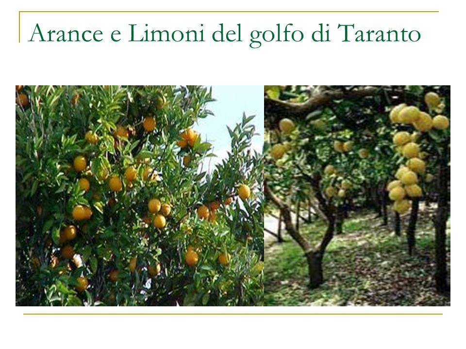Arance e Limoni del golfo di Taranto