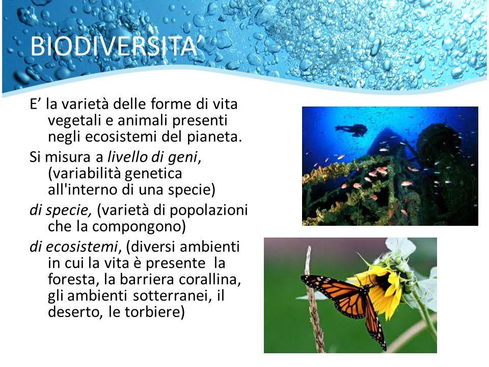 BIODIVERSITA E la varietà delle forme di vita vegetali e animali presenti negli ecosistemi del pianeta. Si misura a livello di geni, (variabilità gene