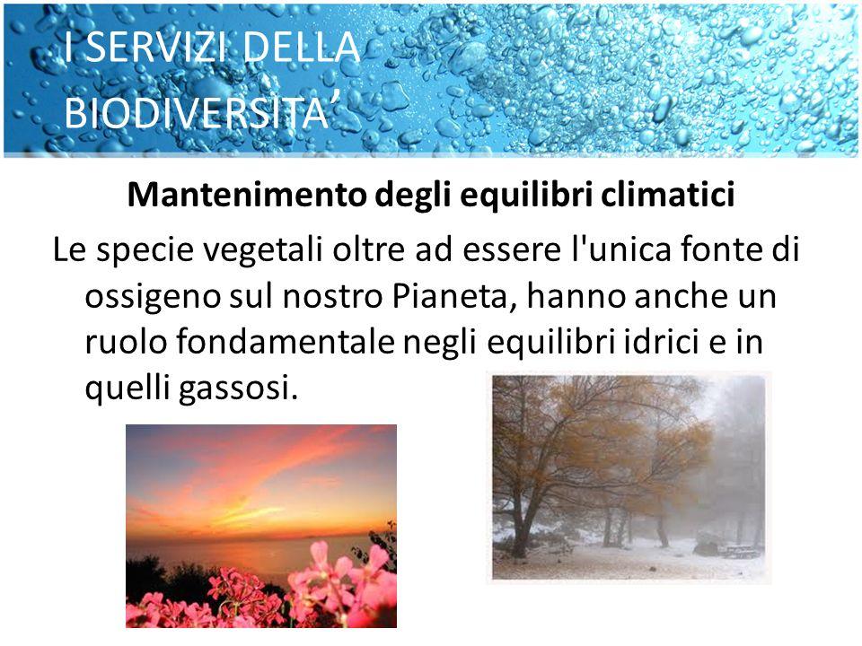 I SERVIZI DELLA BIODIVERSITA Mantenimento degli equilibri climatici Le specie vegetali oltre ad essere l'unica fonte di ossigeno sul nostro Pianeta, h