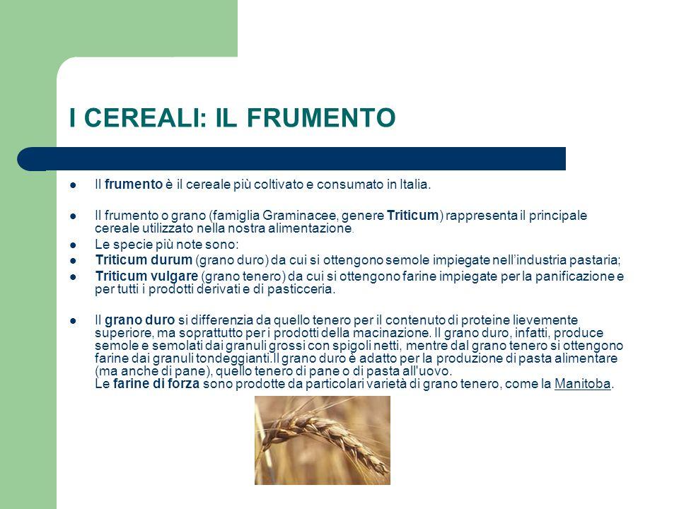 I CEREALI: IL FRUMENTO Il frumento è il cereale più coltivato e consumato in Italia. Il frumento o grano (famiglia Graminacee, genere Triticum) rappre