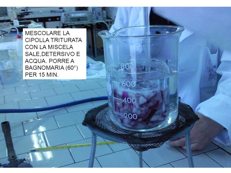 MESCOLARE LA CIPOLLA TRITURATA CON LA MISCELA SALE,DETERSIVO E ACQUA. PORRE A BAGNOMARIA (60°) PER 15 MIN.