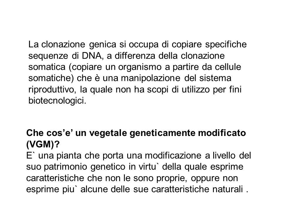 La clonazione genica si occupa di copiare specifiche sequenze di DNA, a differenza della clonazione somatica (copiare un organismo a partire da cellul