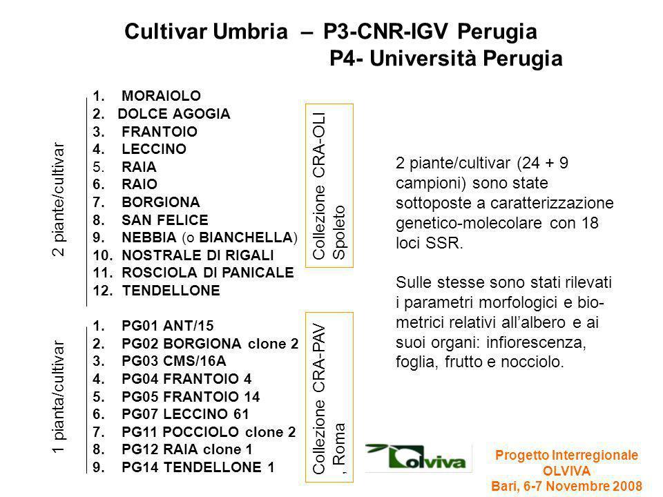 Cultivar Umbria – P3-CNR-IGV Perugia P4- Università Perugia 1. MORAIOLO 2.DOLCE AGOGIA 3. FRANTOIO 4. LECCINO 5. RAIA 6. RAIO 7. BORGIONA 8. SAN FELIC